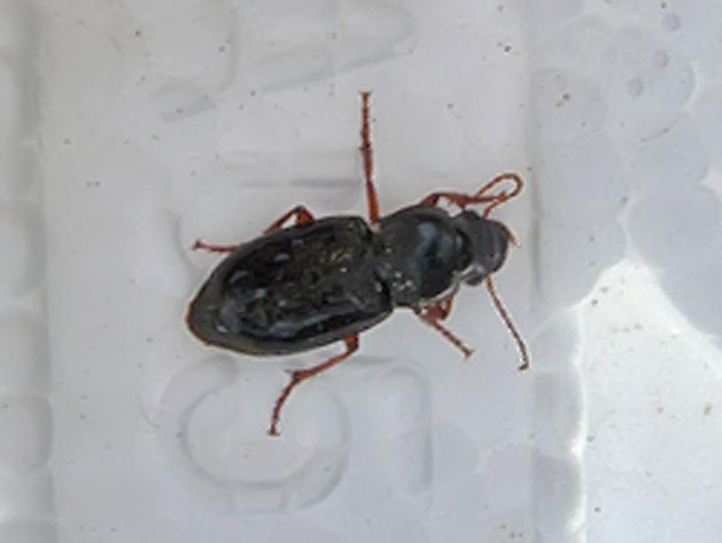 Quel est cet insecte page 2 le monde des insectes - Insecte maison humidite ...